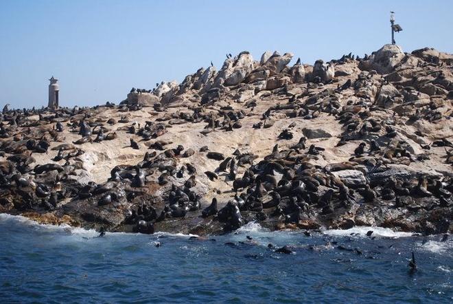 Nhung hon dao chi co loai vat sinh song hinh anh 1 Đảo hải cẩu (Nam Phi): Hòn đảo nhỏ toàn đá ở vịnh False, Nam Phi là vương quốc của 60.000 chú hải cẩu Cape Fur. Ngoài ra, các cộng đồng nhỏ lẻ khác bao gồm mòng biển, chim cốc và chim cánh cụt. Xuôi xuống bờ biển là các loài cá voi, cá heo, cá mập Bronze Whaler bơi lượn quanh vịnh.