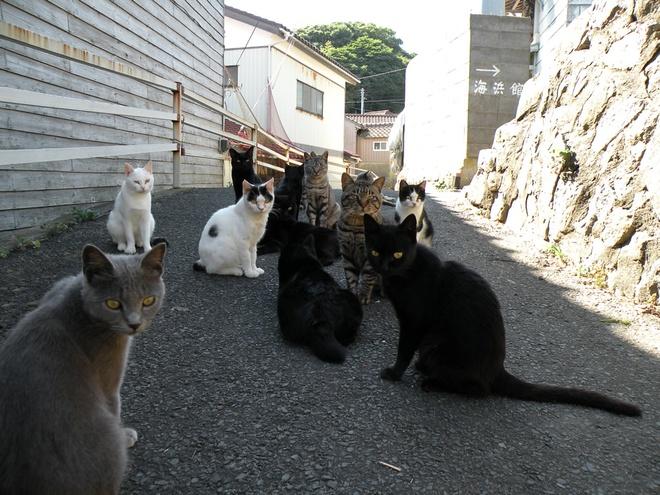 Nhung hon dao chi co loai vat sinh song hinh anh 3 Đảo mèo (Nhật Bản): Tashirojima là thiên đường của những chú mèo Nhật bản tại Ishinomaki, Miyagi trên biển Thái Bình Dương, gần bán đảo Oshika phía tây Ajishima. Trên đảo cũng có người sinh sống, song số lượng mèo gấp nhiều lần số người ở đây. Ngay cả chó cũng bị cấm trên đảo. Dân trên đảo sống bằng nghề đánh bắt cá và tiền thu được nhờ khách du lịch đến thăm mèo.