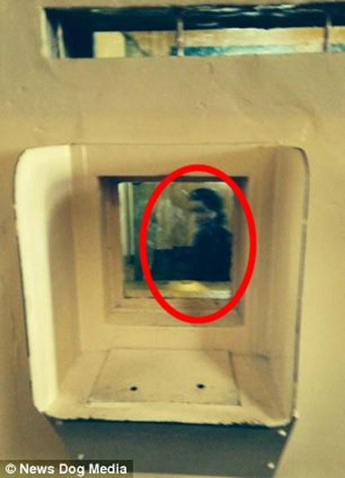 Alcatraz - nha tu hut 1,5 trieu du khach moi nam hinh anh 12 Riêng tour tham quan vào ban đêm tại nhà tù là rất đáng sợ do đây là nơi nổi tiếng với các câu chuyện ma ám. Mỗi đêm có khoảng 700 khách được phép vào tham quan.