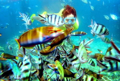 Sai Kung - 'hau hoa vien' cua Hong Kong hinh anh 7 Với những du khách yêu thích bơi lặn, Sai Kung sẽ cho bạn những cảm giác tuyệt diệu. Bởi việc bảo tồn sinh vật biển nơi đây rất tốt nên khi bạn lặn sâu dưới biển, bạn sẽ có cơ hội ngắm nhìn hàng trăm loại cá và san hô khác nhau. Ảnh: Baike