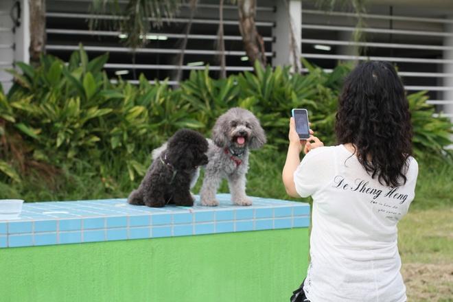 Sai Kung - 'hau hoa vien' cua Hong Kong hinh anh 9 Một nét thú vị nữa là Sai Kung còn nổi tiếng là thiên đường của chó mèo. Những con chó lông xù chạy tung tăng ngoài đường, còn trên ban công, mái nhà là những con mèo nằm dài ra để sưởi nắng là khung cảnh yên bình riêng có của Sai Kung. Ảnh: Sina