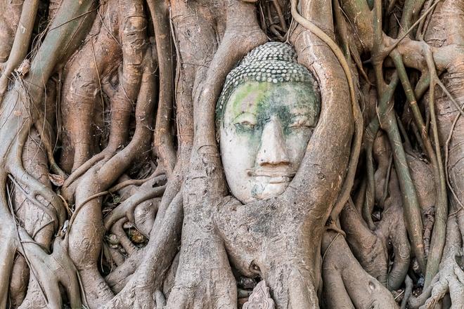Nhung diem du lich tuyet voi nhat Thai Lan hinh anh 17 Đặc biệt bạn không nên bỏ qua ngôi chùa Wat Mahathat, lãnh địa tôn giáo bậc nhất trên đất nước Thái Lan. Điều thú vị nhất là tại ngôi chùa này có khuôn mặt tượng Phật được ôm trọn trong rễ cây, tạo thành một bức tranh sống động và lạ kỳ. Ảnh: Sina