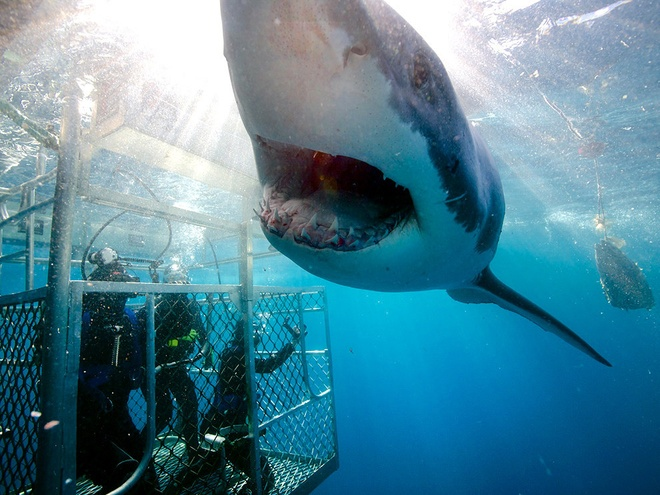 9. Quần đảo Neptune, Australia: Từ năm 2002, quần đảo Neptune là nơi duy nhất ở Australia cho phép lặn xuống biển ngắm cá mập trắng. Du khách đến đây phải tuyệt đối tuân thủ quy định về an toàn, không thò tay chân ra ngoài lồng sắt nếu không muốn làm mồi cho cá mập.