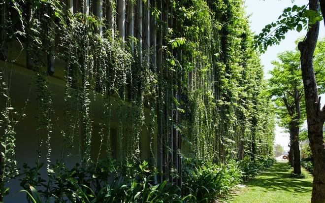Bao Tay ca ngoi khong gian xanh mat cua Naman Da Nang hinh anh 6 Các dây nho giúp cản ánh nắng và đón gió, nhằm giảm nhiệt trong mùa hè oi ả.