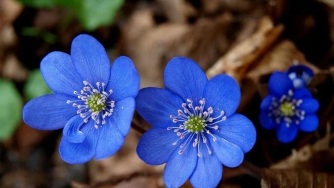 Van may ngay thu bay (22/8) hinh anh 1 Màu xanh may mắn của Xử Nữ.