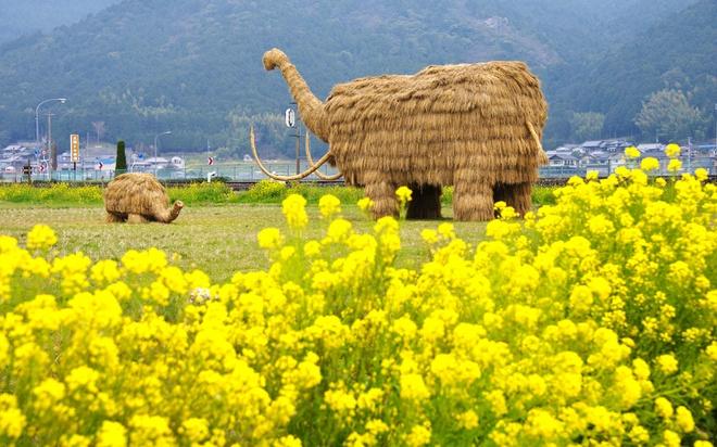 Cảnh tượng này diễn ra tại tỉnh Niigata, Nhật Bản từ tháng 9 đến tháng 11 hằng năm. Sau khi thu hoạch lúa, các sinh viên chuyên ngành kiến trúc và nghệ thuật cùng người dân địa phương tận dụng những đụn rơm thừa để tạo ra những tác phẩm nghệ thuật độc đáo.