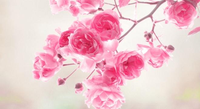 Van may ngay thu ba (27/10) hinh anh 1 Hồng ngọt ngào là màu may mắn của Bọ Cạp.