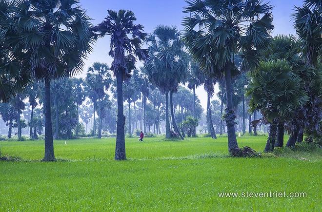 Ve Chau Doc - xu so cua nhung hang cay thot not hinh anh