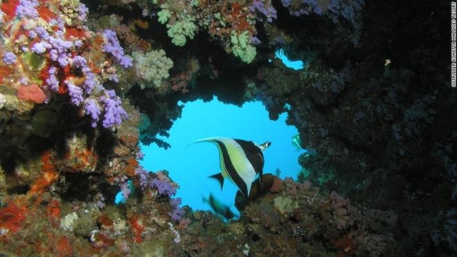 Maldives - noi du khach khong bao gio co don hinh anh 2