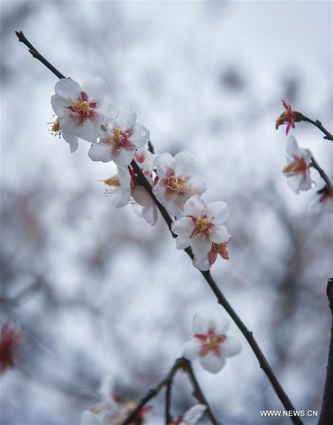 Rung hoa man trang no ro o Hang Chau hinh anh 4