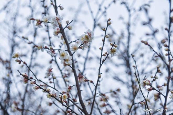 Rung hoa man trang no ro o Hang Chau hinh anh 6