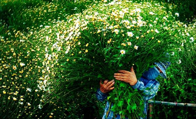 'Dau an Viet Nam': 12 mua hoa ruc ro sac mau hinh anh