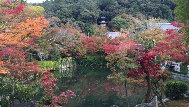 15 dia diem ngam la do tuyet dep o co do Kyoto hinh anh 15