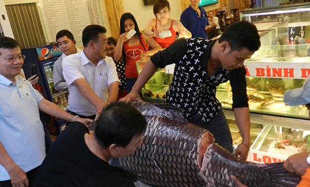 Ca khung boi ve... Sai Gon hinh anh 1 CHÍNH TRỊ - XÃ HỘI PHÓNG SỰ - KÝ SỰ Cá khủng bơi về... Sài Gòn 15/12/2014 11:00 GMT+7 TT - Con cá hô nặng 127kg, sau ba ngày về tới TP.HCM đã được bán hết sạch.  Chờ đợi được thưởng thức cá hô - Ảnh: N.H. Chờ đợi được thưởng thức cá hô .