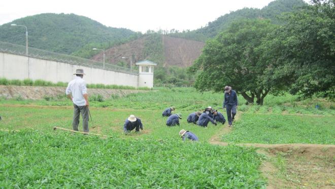 Nhung loi sam hoi cua nguoi nghien ma tuy hinh anh 2 Giờ lao động của các học viên tại Trung tâm 05- 06.