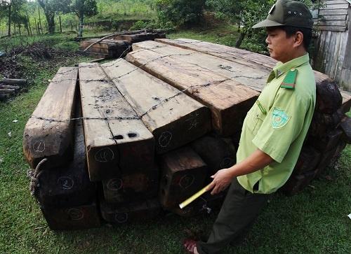 Bat 2 nghi can pha rung Ba Na - Nui Chua hinh anh 1 Số gỗ bị lâm tặc khai thác trái phép được lực lượng kiểm lâm phát hiện thu giữ.