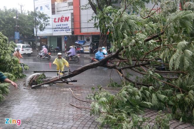 Đà Nẵng có 460 cây xanh bị ngã đổ do bão số 3. Ảnh: Đoàn Nguyên.