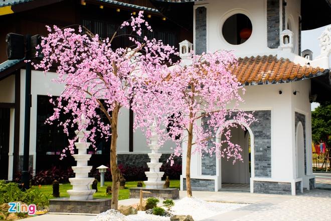 Le hoi hoa anh dao Hanami Da Nang truoc ngay khai mac hinh anh 3
