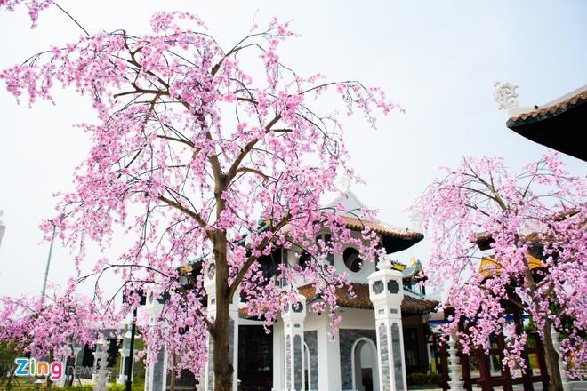 Le hoi hoa anh dao Hanami Da Nang truoc ngay khai mac hinh anh 4
