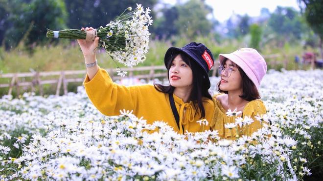 Cuc hoa mi no ro o Da Nang thu hut gioi tre hinh anh