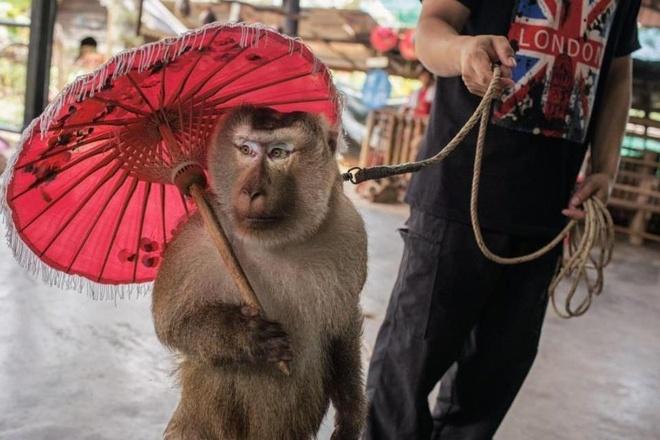 Noi am anh canh day dong vat lam xiec, phuc vu du lich o Thai Lan hinh anh