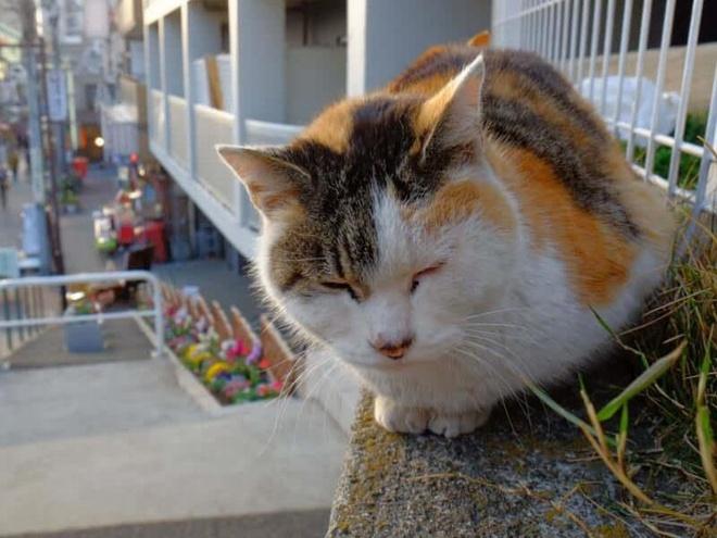 Thi tran meo hoang ngay sat thu do Tokyo on a hinh anh