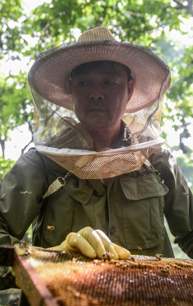Mùa lấy mật của triệu phú nuôi ong