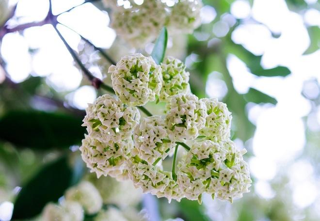 Vi sao hoa sua khien dan Ha Noi 'am anh' nhat hien nay? hinh anh