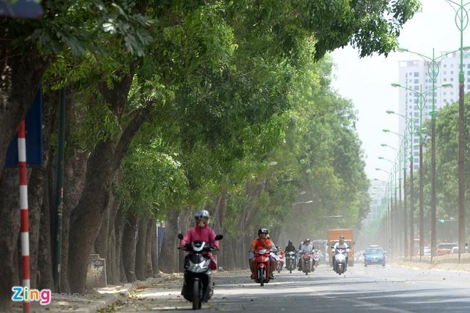 Trong giang huong thay the 1.300 cay xanh tren duong Pham Van Dong hinh anh 1
