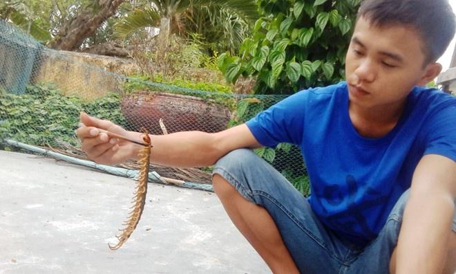 Bi ret can nguy hiem o muc nao? hinh anh 1 Con rết khủng dài hơn 25 cm được một người dân Huể bắt được. Ảnh: Điền Quang.