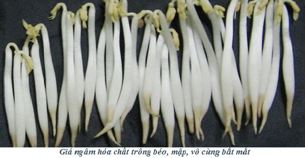 Can than an phai gia do co hoa chat cam hinh anh 1