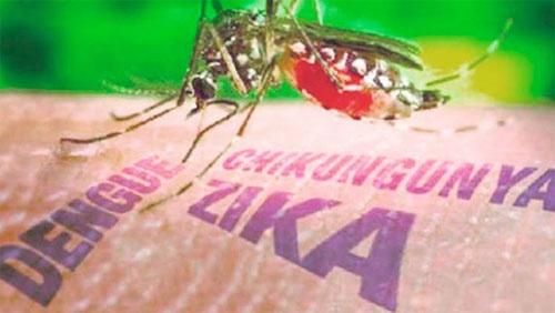 Virus Zika an nao nguoi nguy hiem nhu sot xuat huyet hinh anh