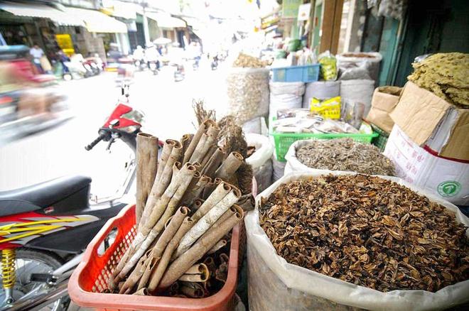 Viet Nam lan dau tien to chuc hoi cho thuoc nam hinh anh