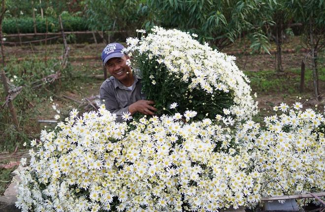 Cuc hoa mi be li ti xuong pho Ha thanh hinh anh 4