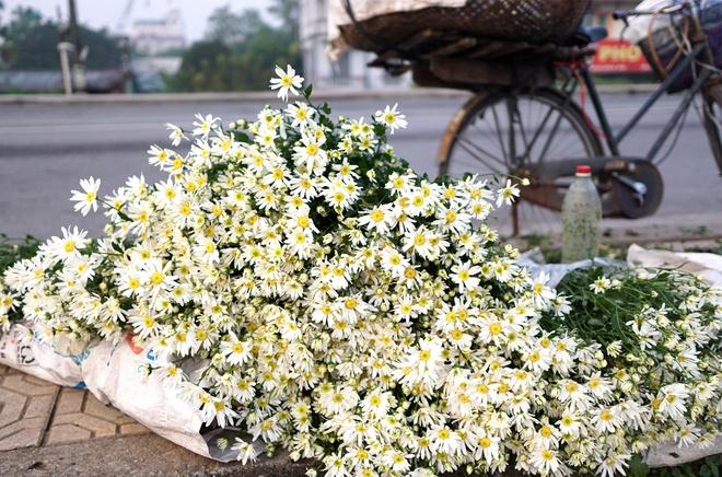 Cuc hoa mi be li ti xuong pho Ha thanh hinh anh 9
