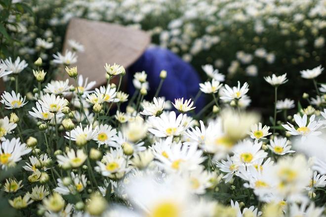 Cuc hoa mi be li ti xuong pho Ha thanh hinh anh 6