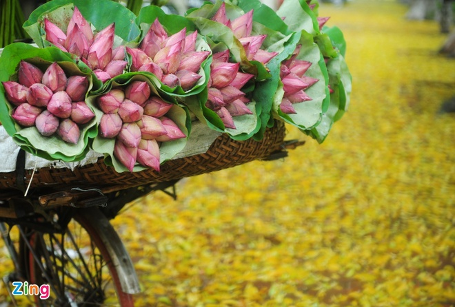 Ha Noi ruc ro mua hoa sen hinh anh 13