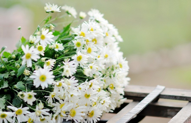 Cuc hoa mi xuong pho Ha thanh hinh anh 5