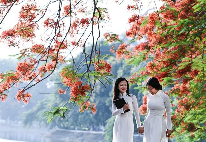 Hoa phuong do ruc ro khap Ha Noi hinh anh