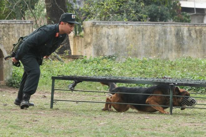 Noi huan luyen nhung chu cho 'chien binh' dac biet hinh anh