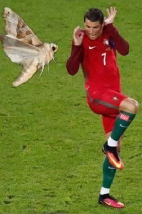 Anh vui ve chu buom dau tren mat Ronaldo hinh anh 4