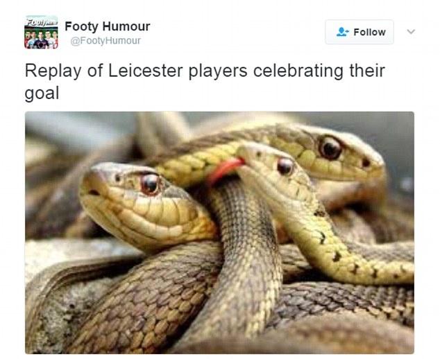 Ca doi Leicester bi xo xien la ran doc hinh anh 1