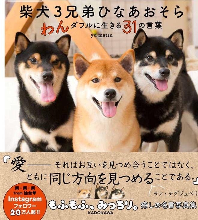 3 anh em cho Shiba noi tieng tren mang, co trang web ban hang online hinh anh 6