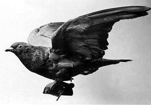 Chu chim bo cau duoc phong anh hung giai cuu hon 500 binh si hinh anh 4