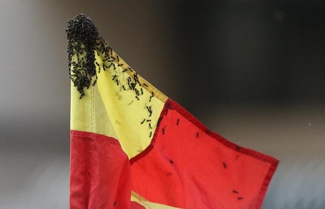Dani Alves bi dan ong tan cong khi thi dau tai giai Brazil hinh anh 2
