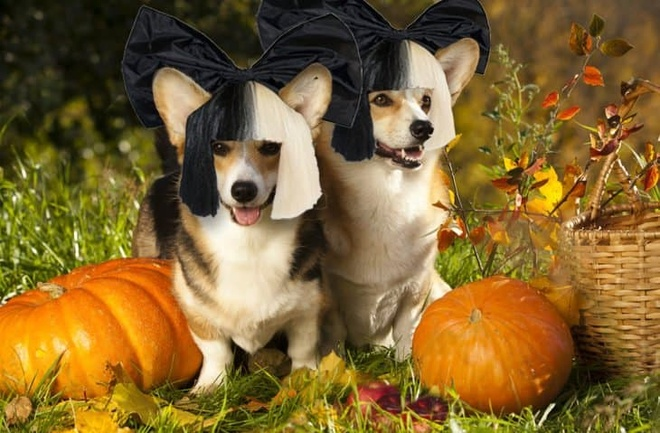 Loat trang phuc Halloween 'ba dao' nhin nhu do dien hai cua gioi tre hinh anh 1