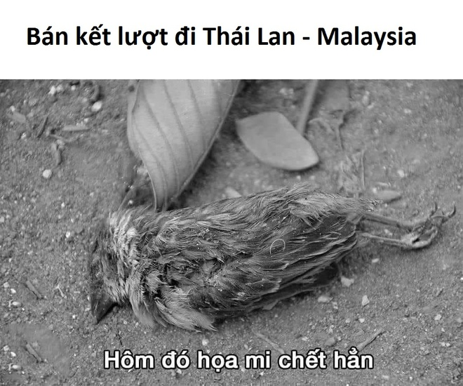 Anh che 'chim hoa mi Malaysia khong hot' du co nhieu co hoi hinh anh 4