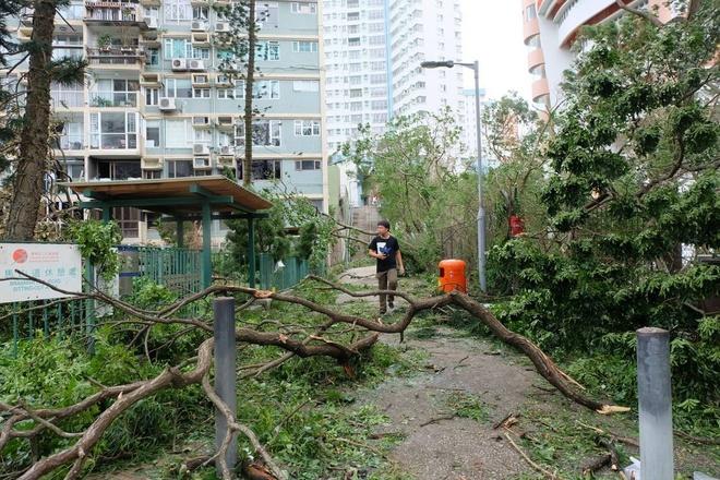 'Vet seo' Mangkhut: Hong Kong phai trong lai 54.000 cay bi quat nga hinh anh 1