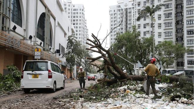 'Vet seo' Mangkhut: Hong Kong phai trong lai 54.000 cay bi quat nga hinh anh 2