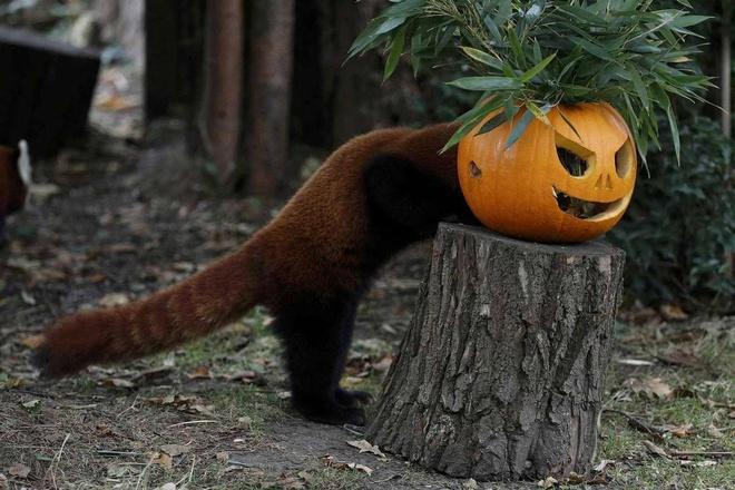 Ten goi Halloween co nghia gi? hinh anh 7